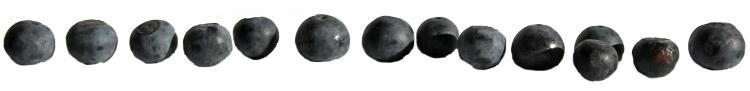 blåbärrad