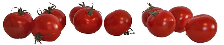 tomatradliten